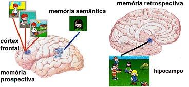 Denise Mineiro - Desenvolvimento da Memória